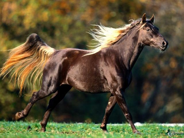 Спортивный конь