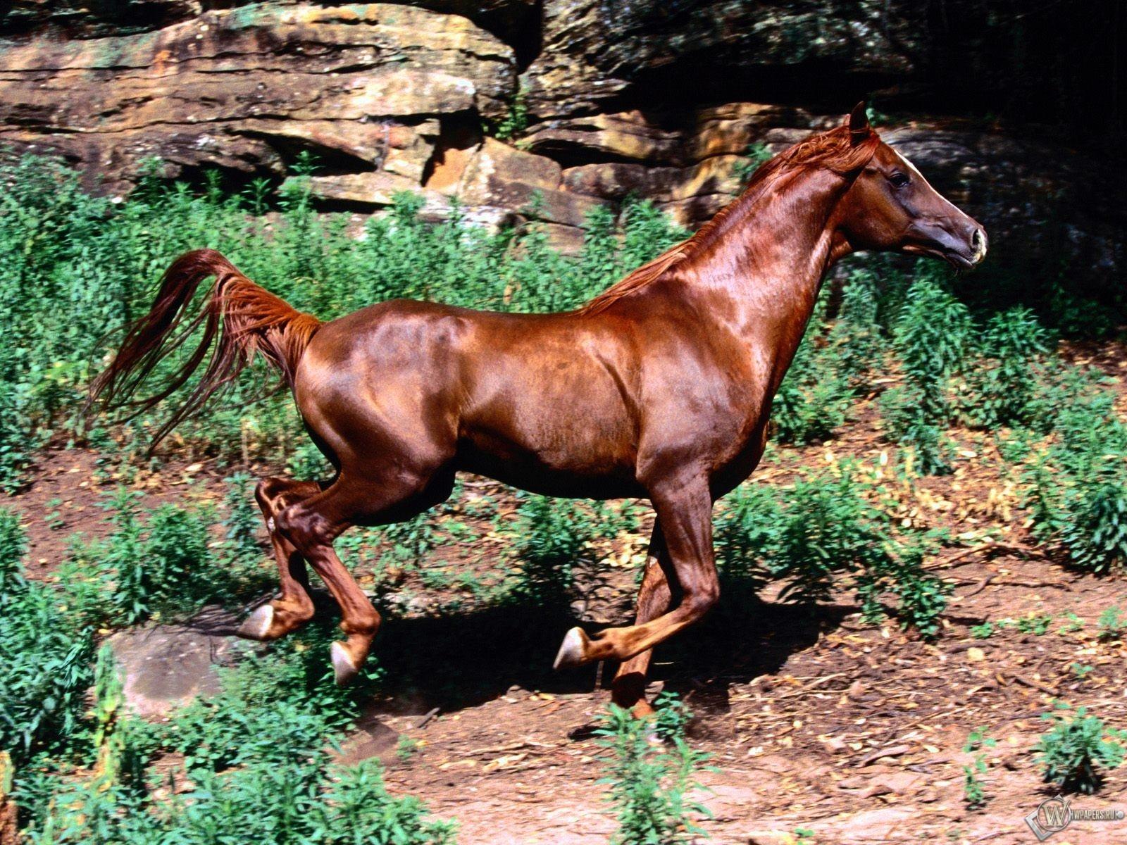 Бегущий конь 1600x1200
