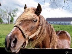 Обои Лошадь в стойле: , Лошади