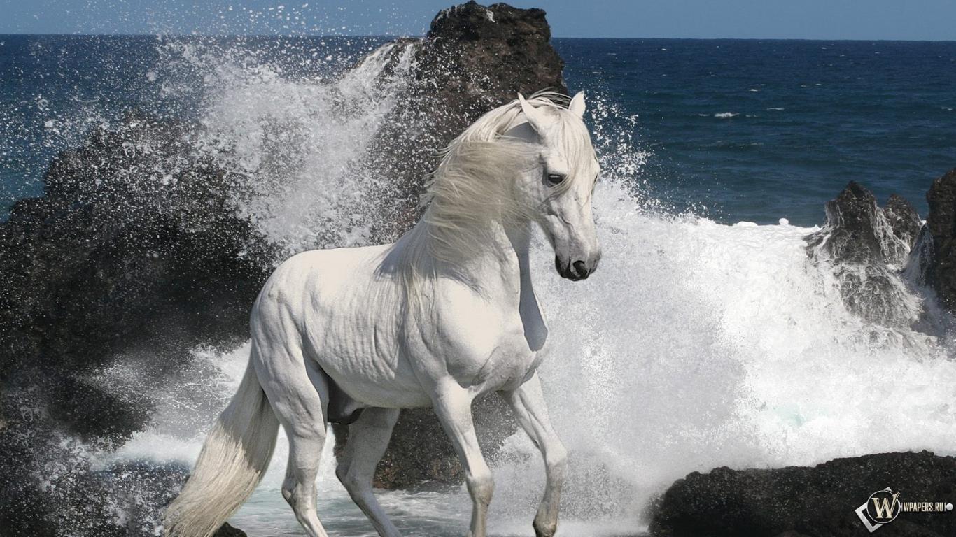 Белый конь на берегу 1366x768