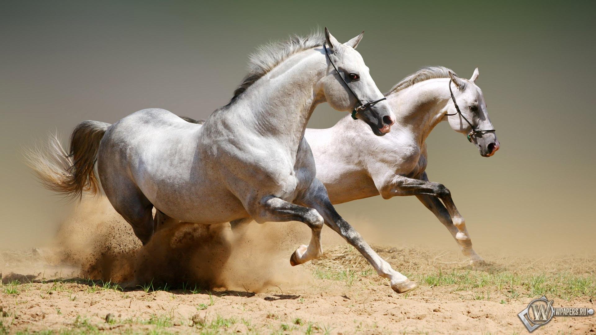 лошади на рабочий стол картинки
