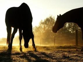 Обои Лошади на пасбище: Тени, Солнце, Лошади, Пастбище, Лошади