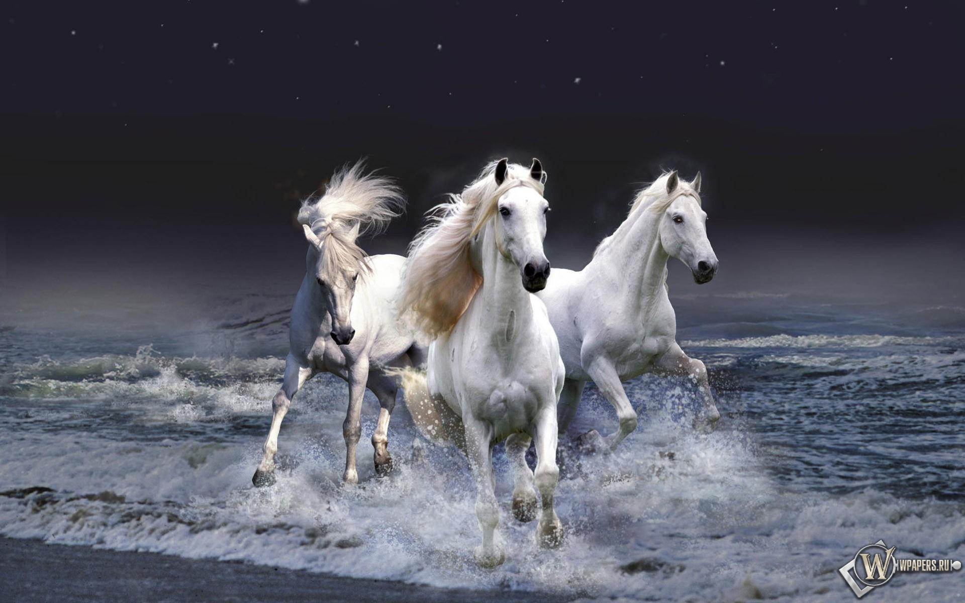 Белые лошади бегущие по волнам 1920x1200