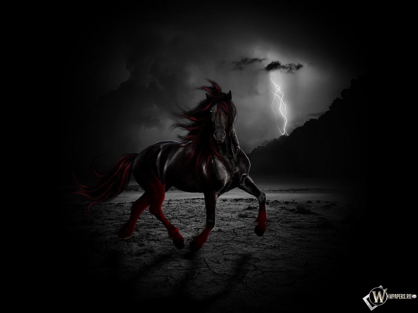 Черный конь ночью 1600x1200