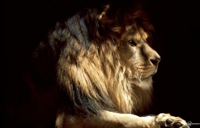 Профиль Льва