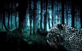 Обои Лес и леопард: Леопард, Лес, Деревья, Ночь, Леопарды
