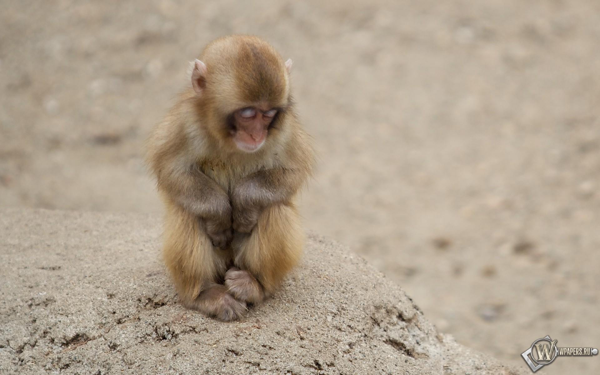 Маленькая обезьянка спит 1920x1200