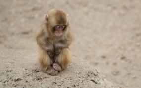 Маленькая обезьянка спит