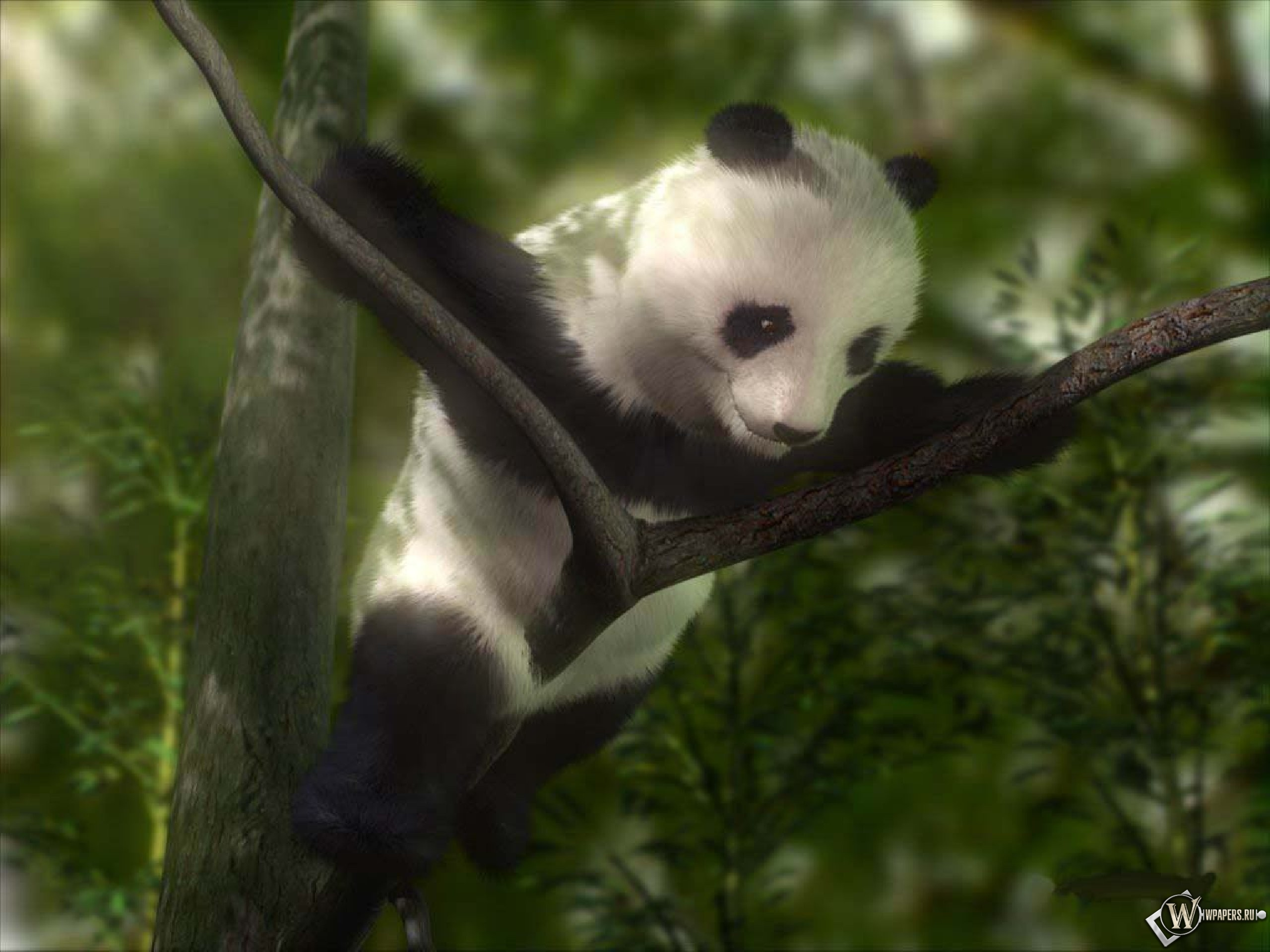 Панда на дереве 2560x1920