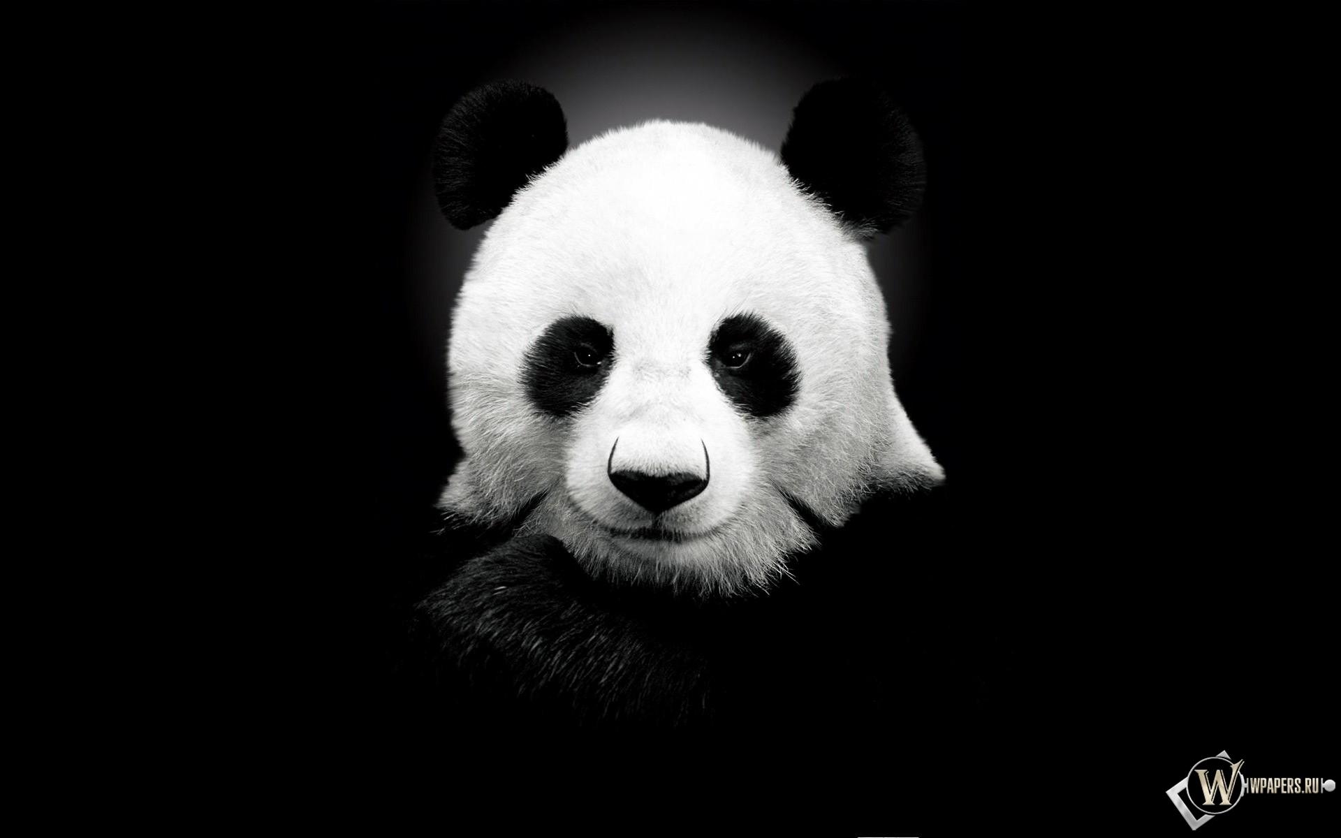 Панда на черном фоне 1920x1200