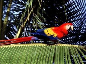 Обои Дикий попугай: , Попугаи