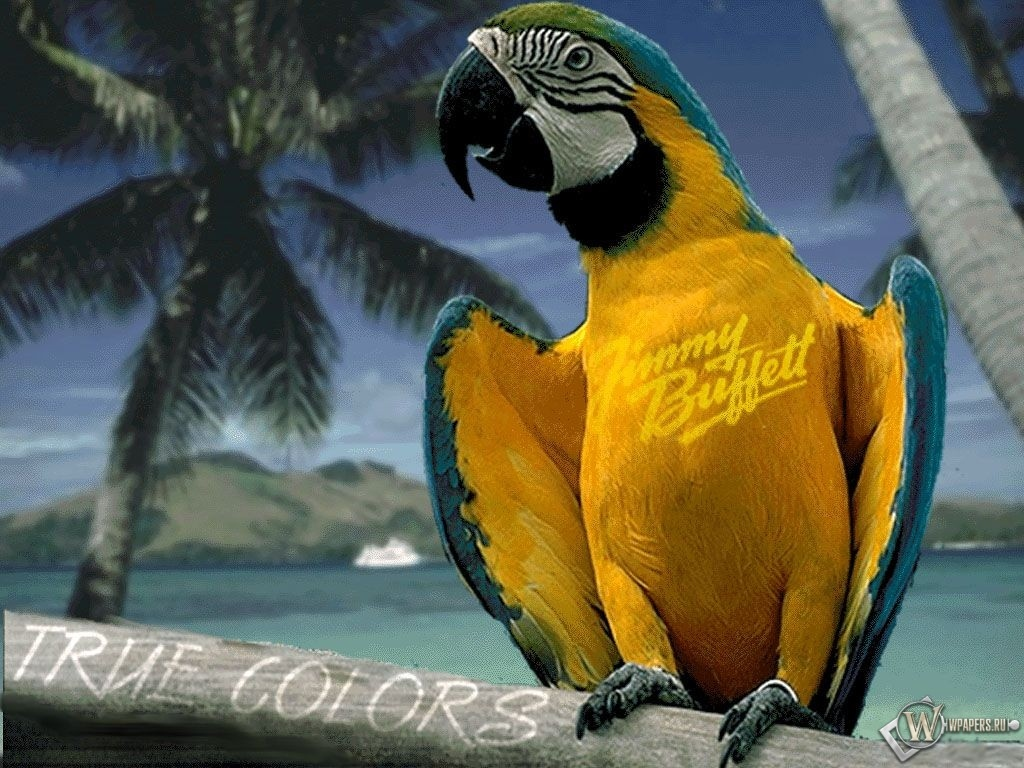 Разноцветный попугай 1024x768
