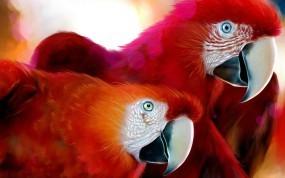 Обои Красные попугаи: Красный, Попугаи, Ара, Попугаи