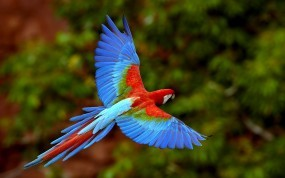 Обои Яркий попугай: Попугай, Цвет, Яркий, Попугаи