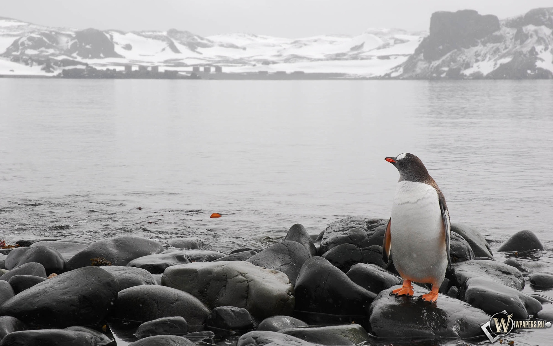 Пингвин на берегу 1920x1200