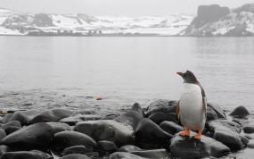 Обои Пингвин на берегу: Море, Камни, Горизонт, Пингвин, Пингвины