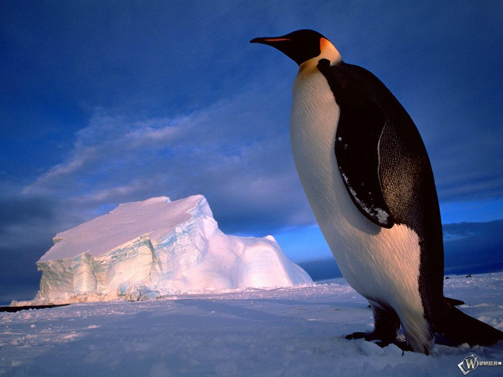 Пингвин на фоне глыбы 1600x1200