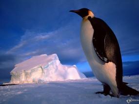 Пингвин на фоне глыбы