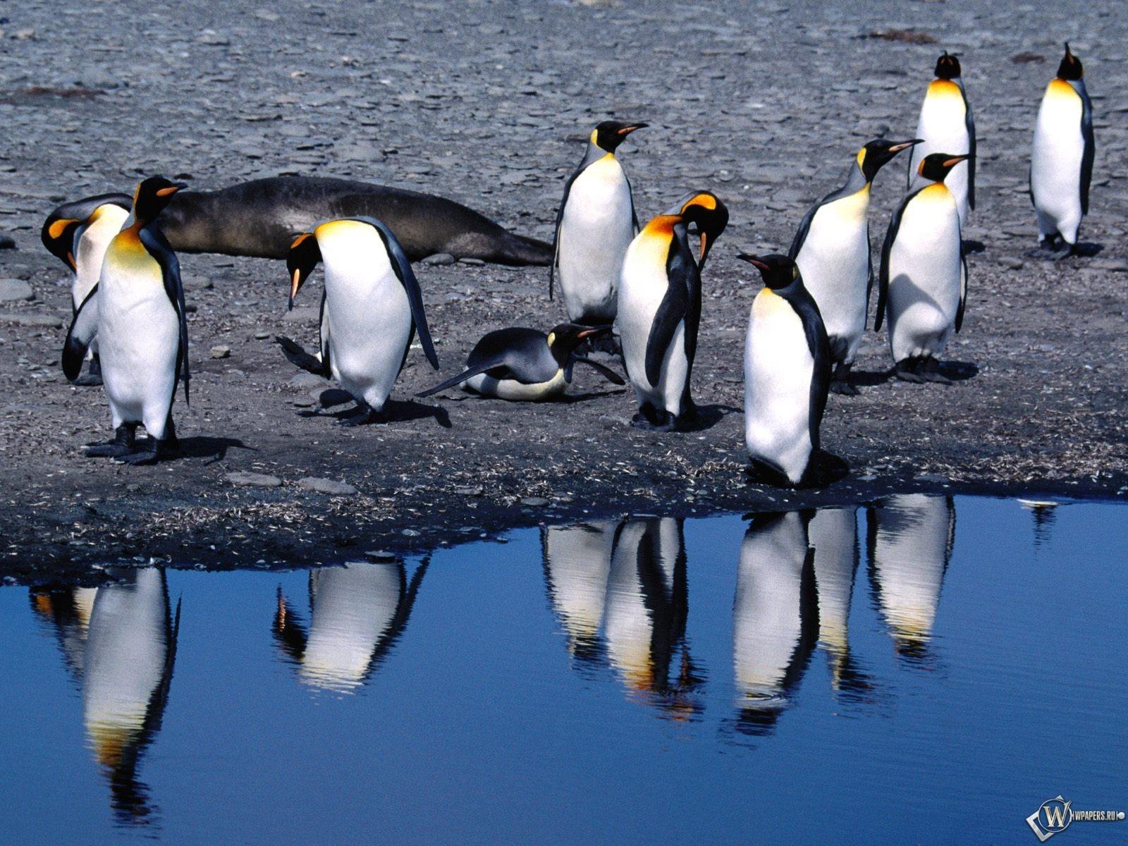 Пингвины на берегу 1600x1200