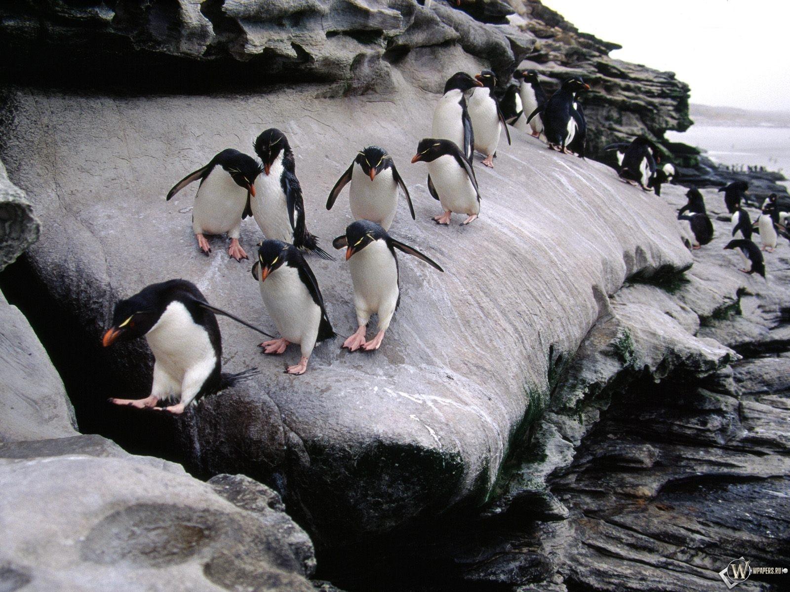 Пингвины на льдине 1600x1200