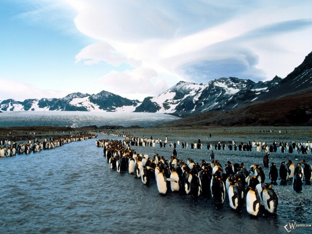 Пингвиний форум