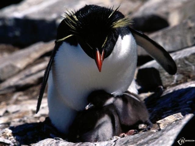 Пингвин с детенышами