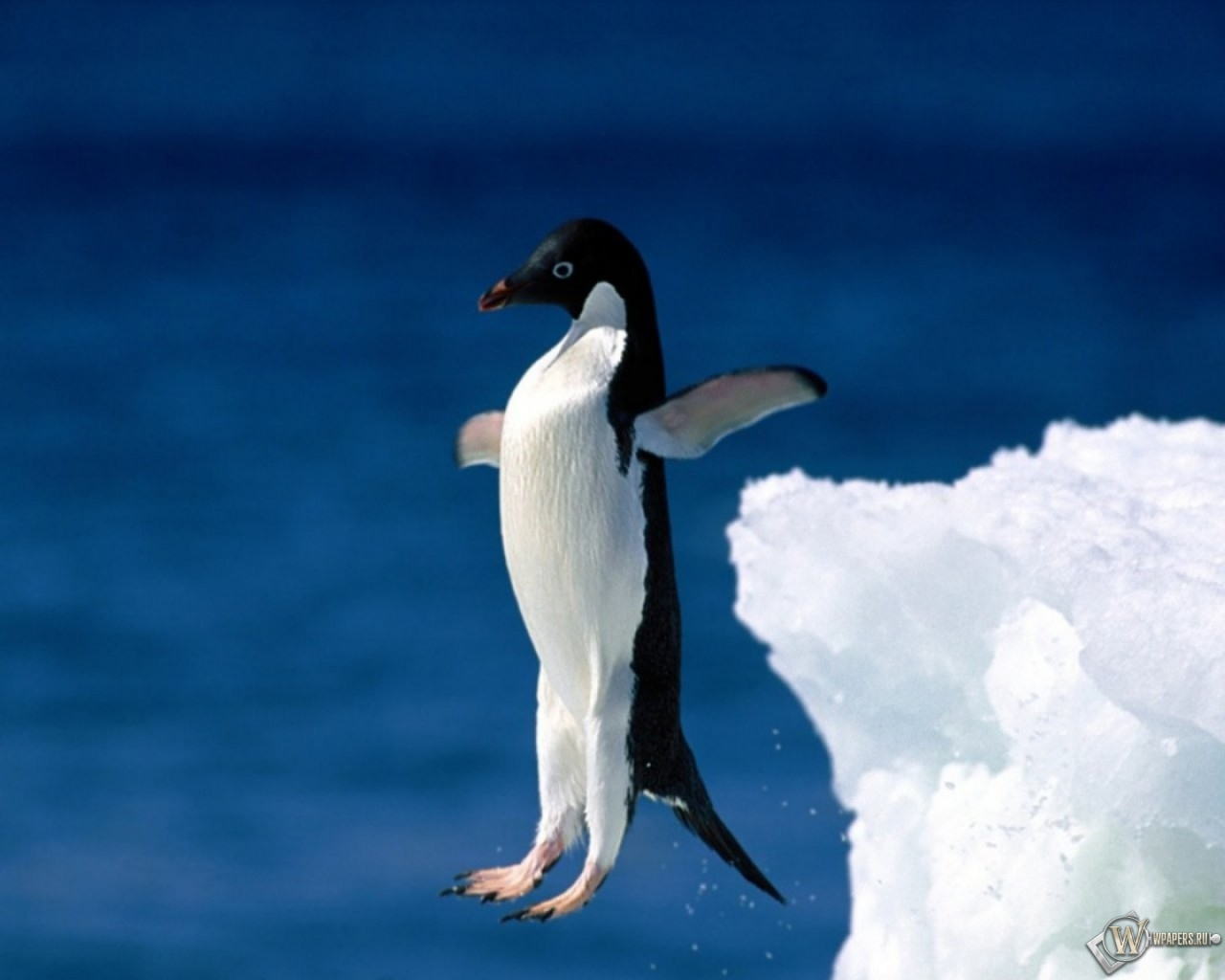 Пингвин в прыжке 1280x1024