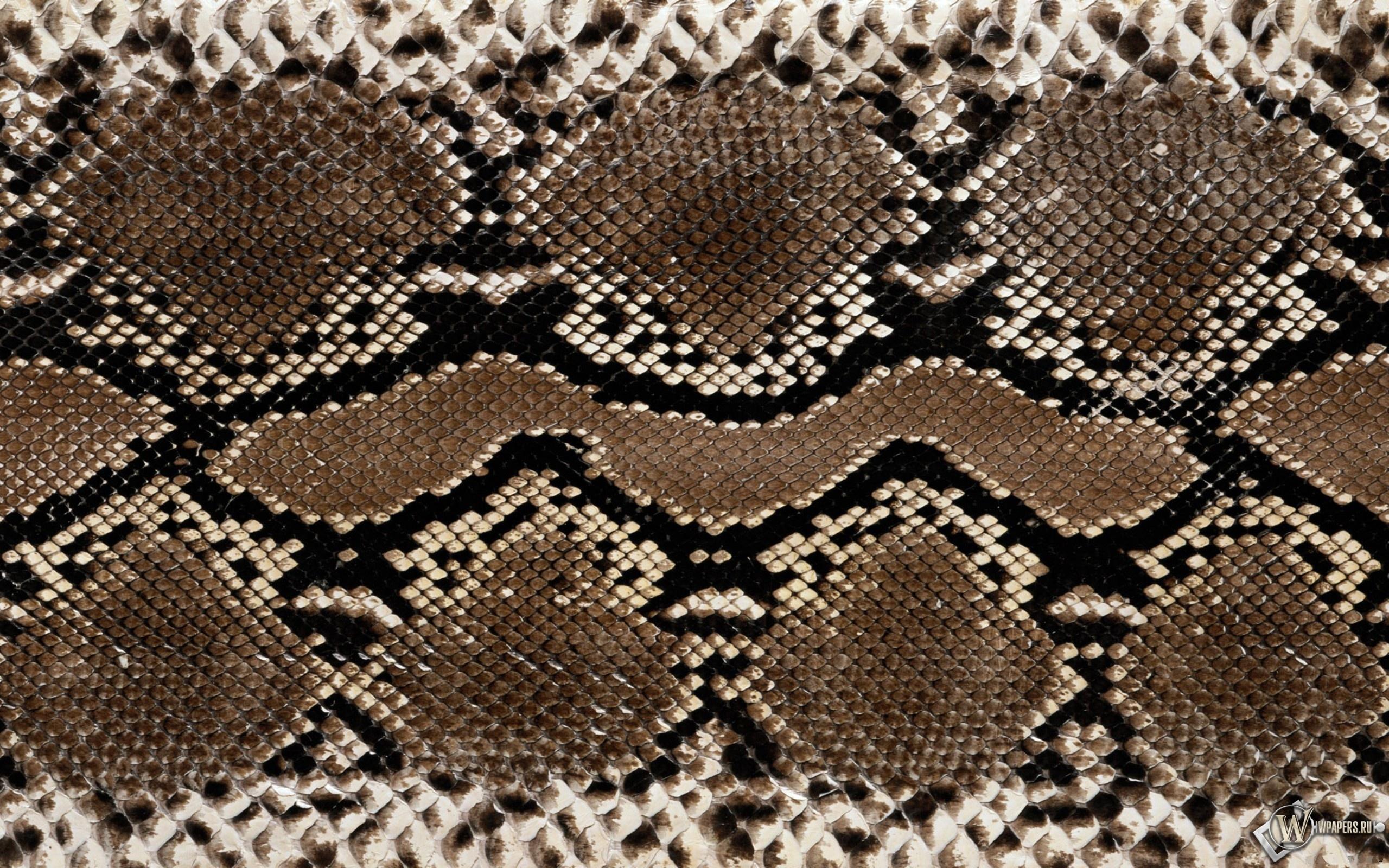Кожа змеи 2560x1600