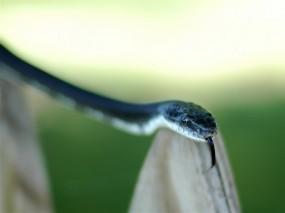 Синяя змея