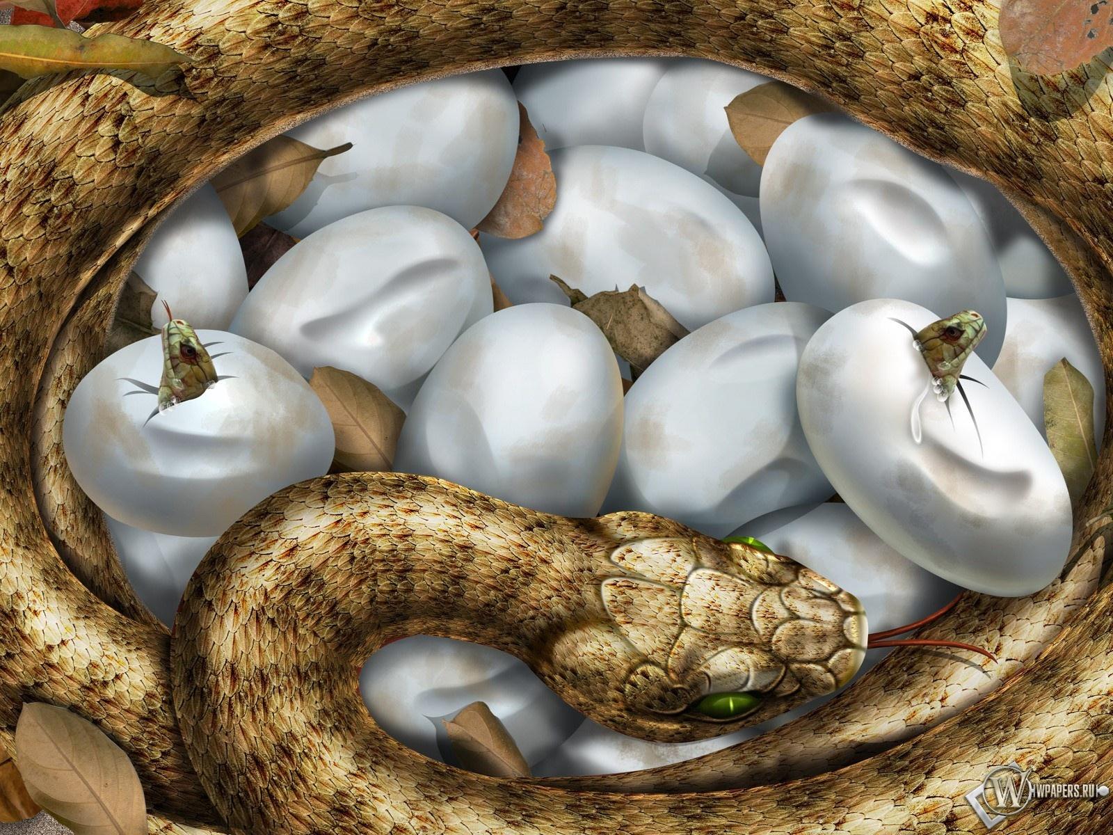 Змеиные яйца 1600x1200