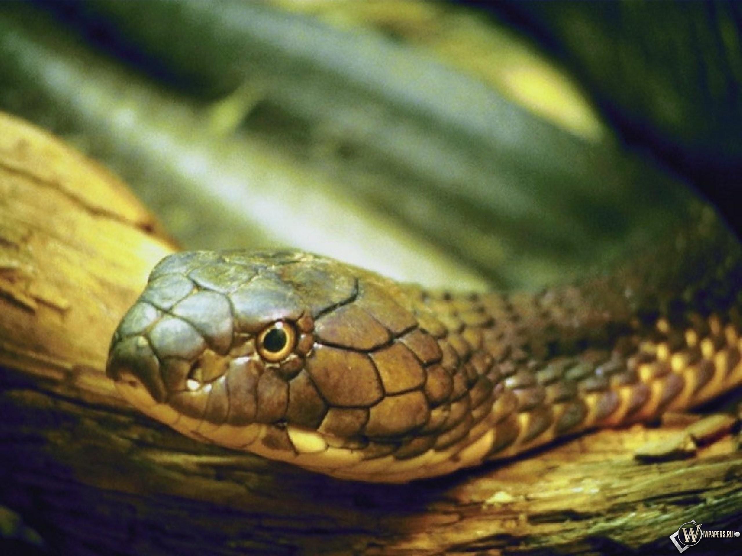 Змея 2560x1920