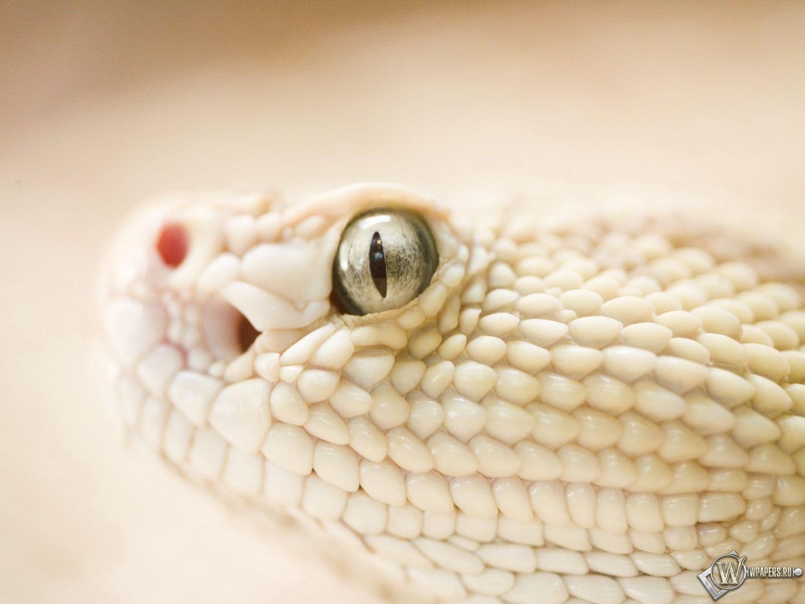 Голова змеи 1600x1200