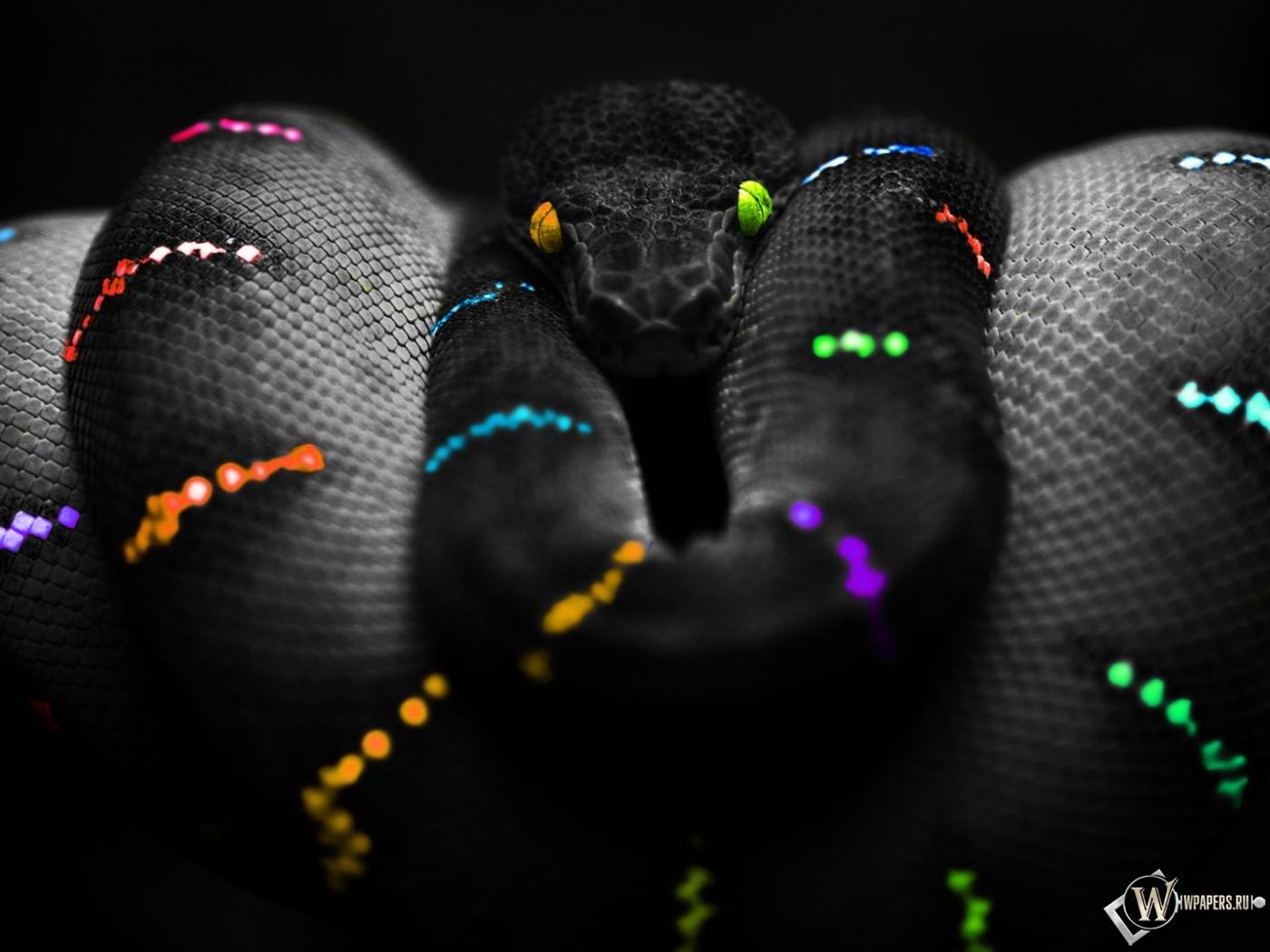 Цветная змея 1400x1050