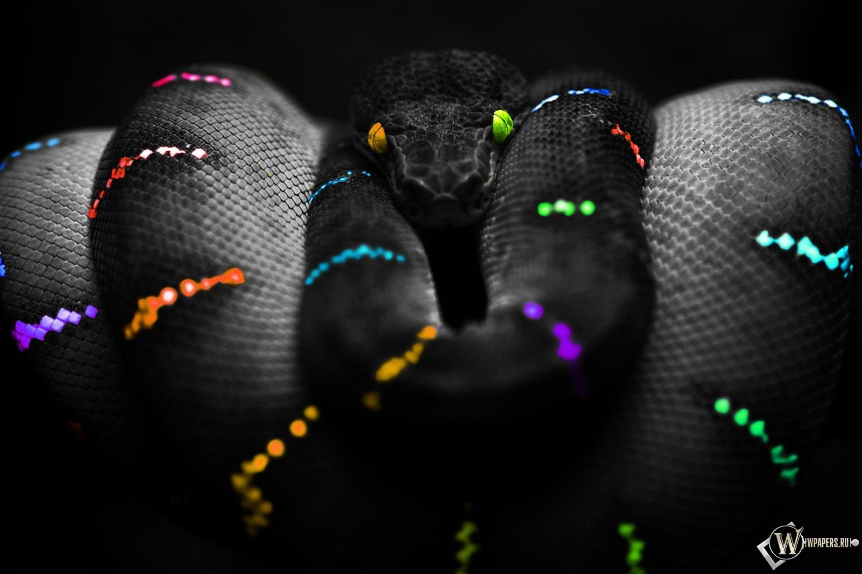 Цветная змея 1500x1000