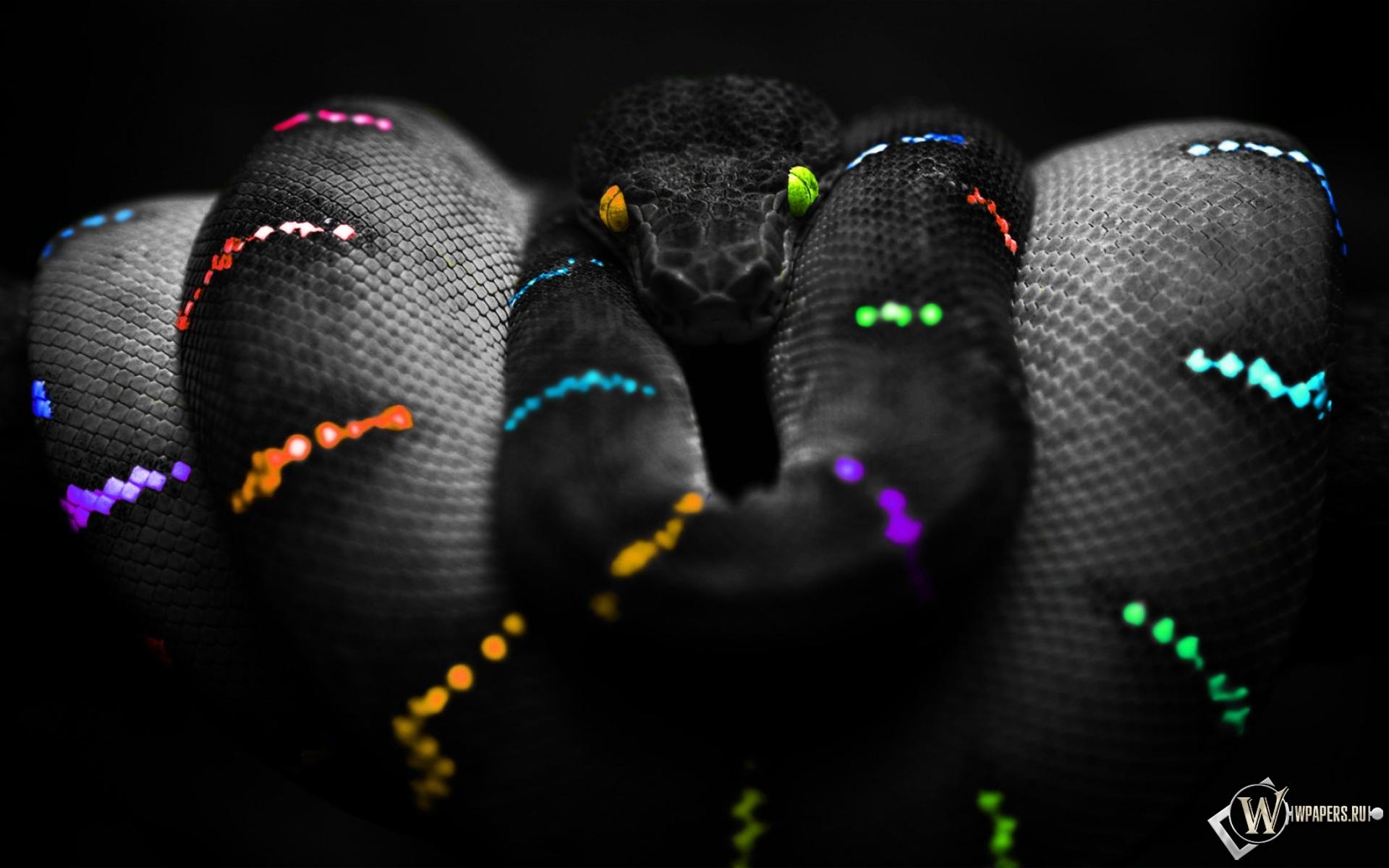 Цветная змея 1920x1200