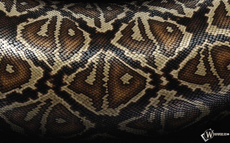 Змеиная шкура 1440x900