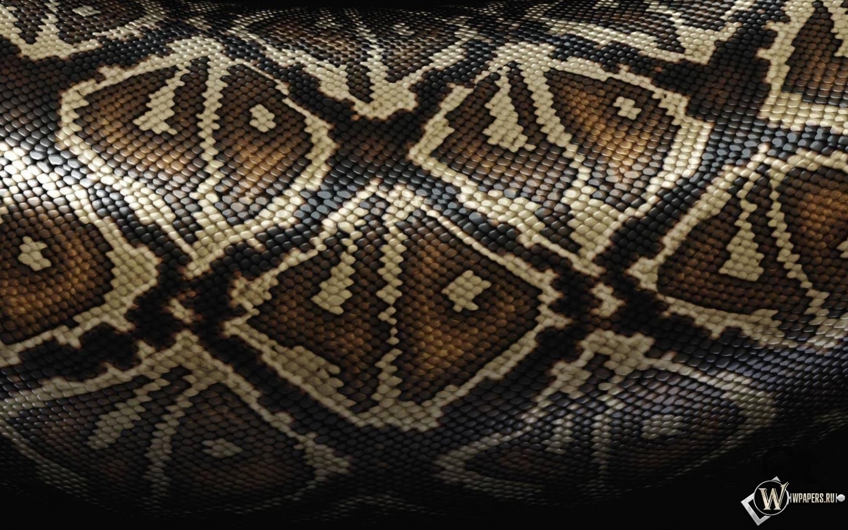 Змеиная шкура 1680x1050