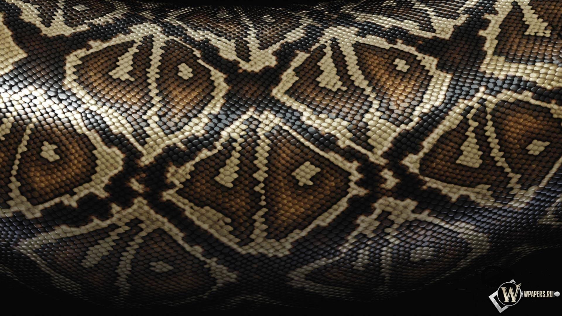 Змеиная шкура 1920x1080
