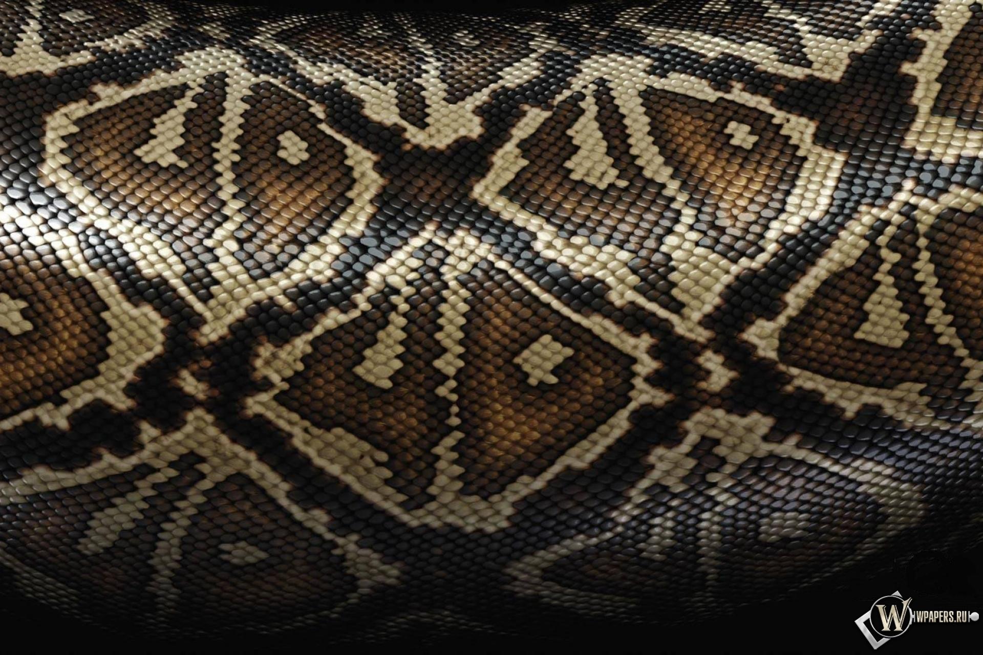 Змеиная шкура 1920x1280
