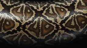 Змеиная шкура