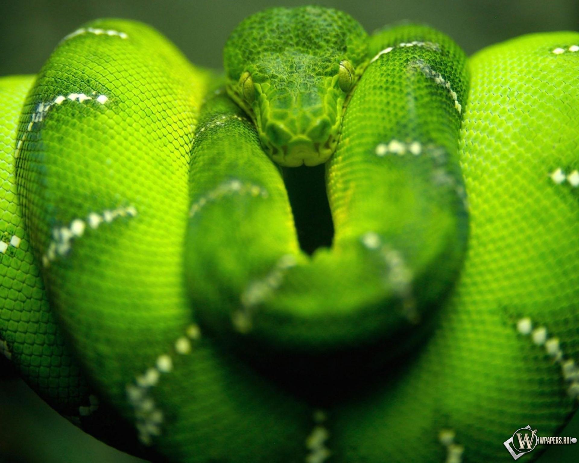 Зеленая змея 1920x1536