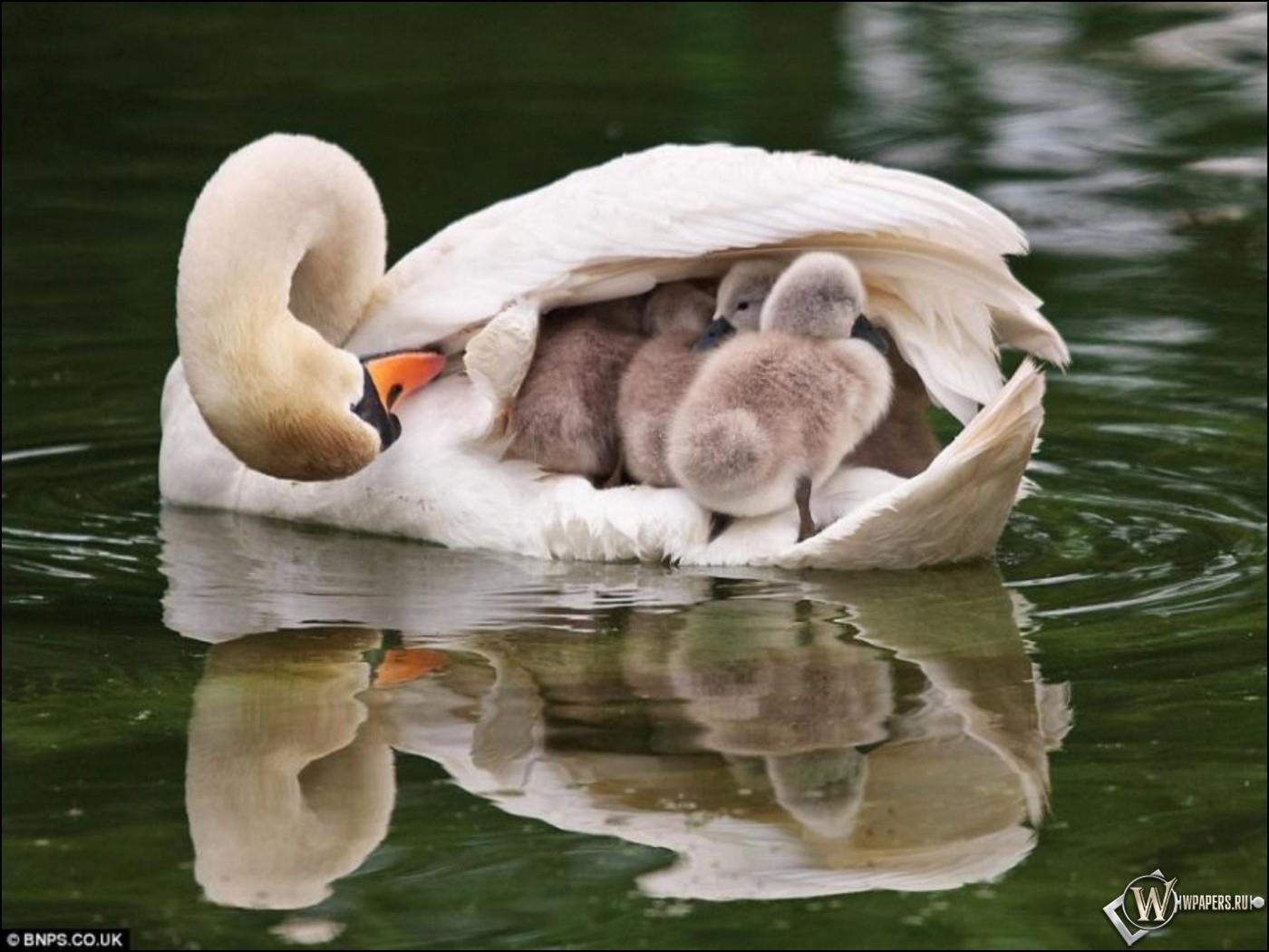 Мать с детенышами 1400x1050