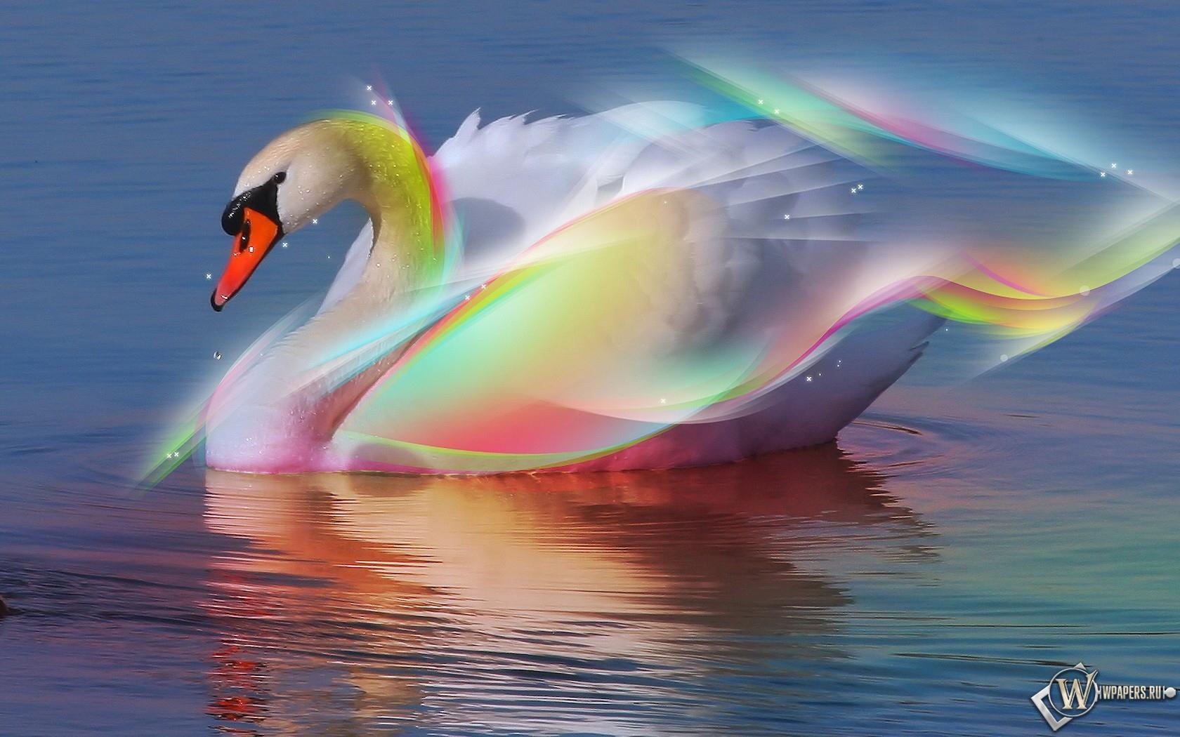 Радужный лебедь 1680x1050