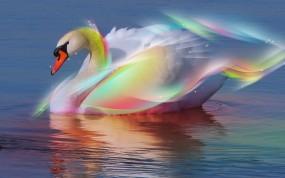 Обои Радужный лебедь: Вода, Радуга, Лебедь, Лебеди