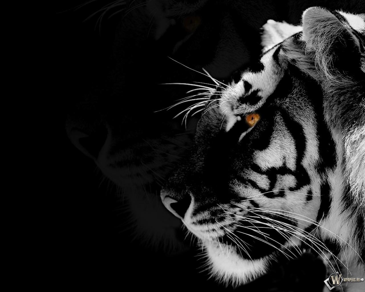Скачать обои Black-white Tiger (Животные, Тигр, Чёрно