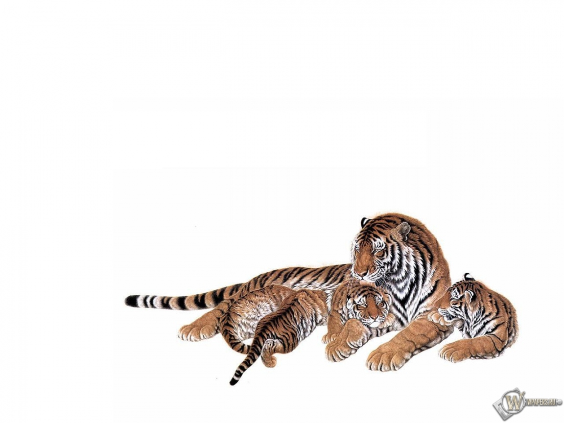 Тигрица с тигрятами 8