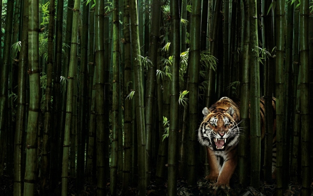 Тигр в бамбуке