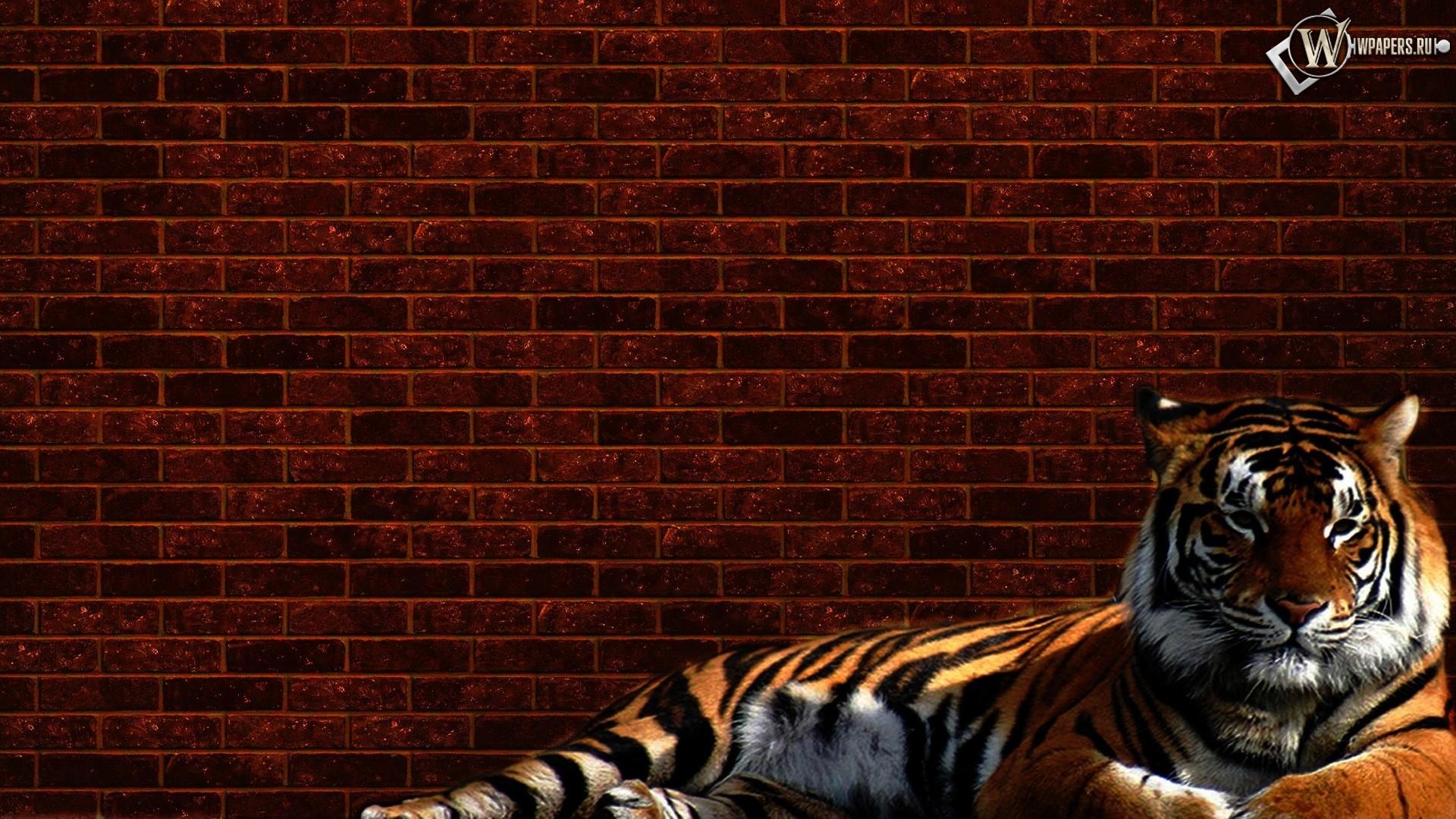 Тигр у стены 1920x1080