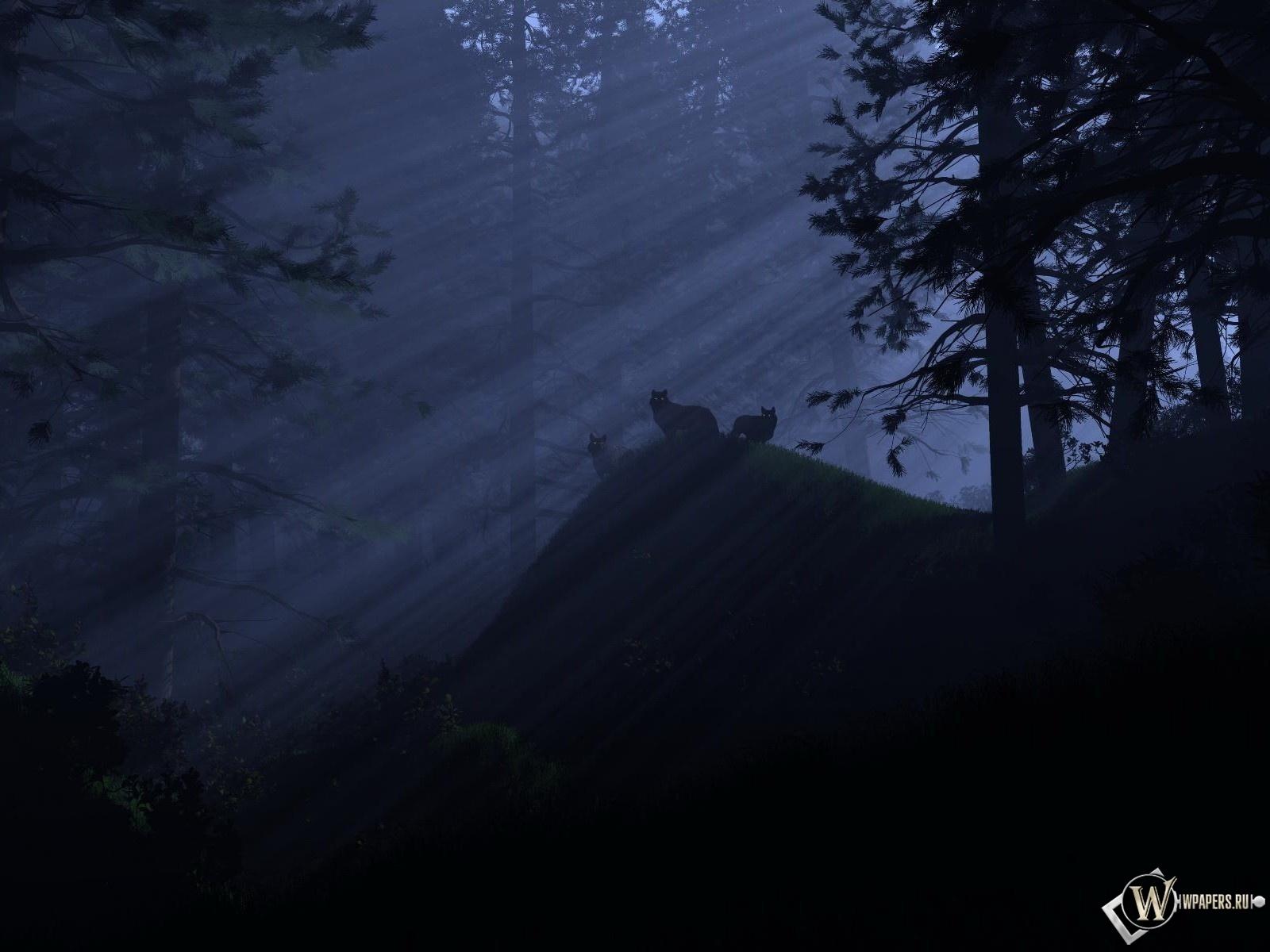 Волки ночью 1600x1200