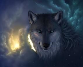 Обои Мудрый волк: Облака, Взгляд, Волк, Волки